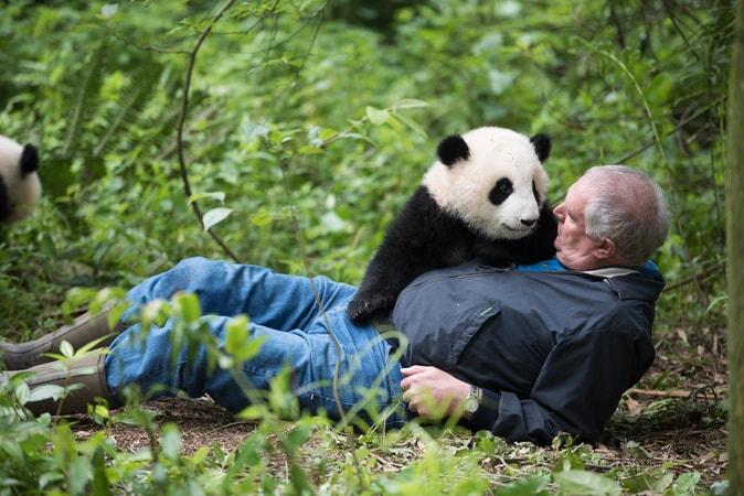 Pandas - Image - Image 12