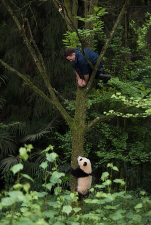 Pandas - Image - Image 13