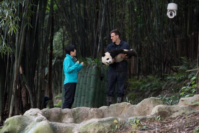 Pandas - Image - Image 16