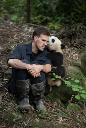 Pandas - Image - Image 17