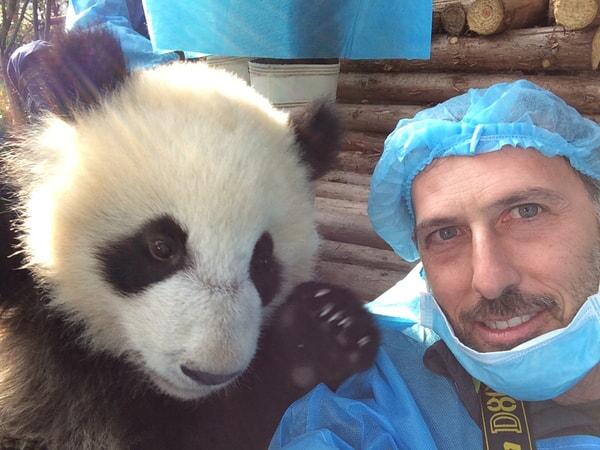 Pandas - Image - Image 32