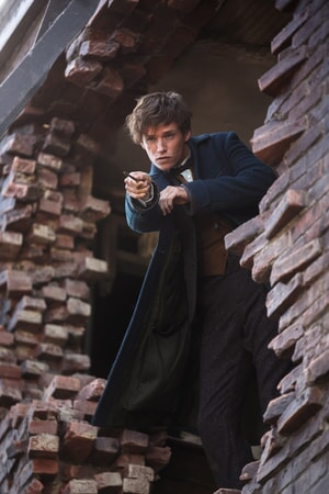 Fantastic Beasts And Where To Find Them - Image - Image 1