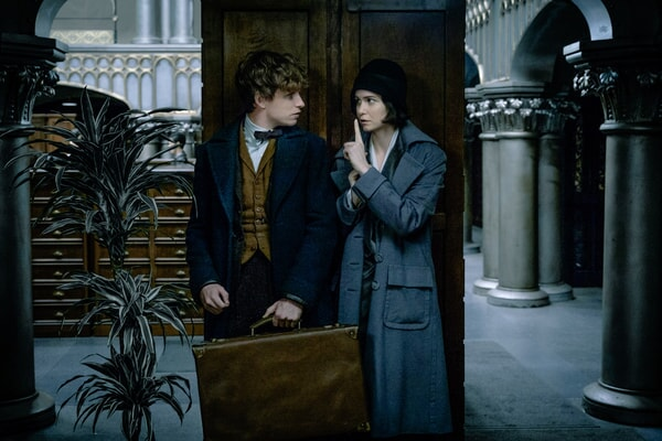 Fantastic Beasts And Where To Find Them - Image - Image 12